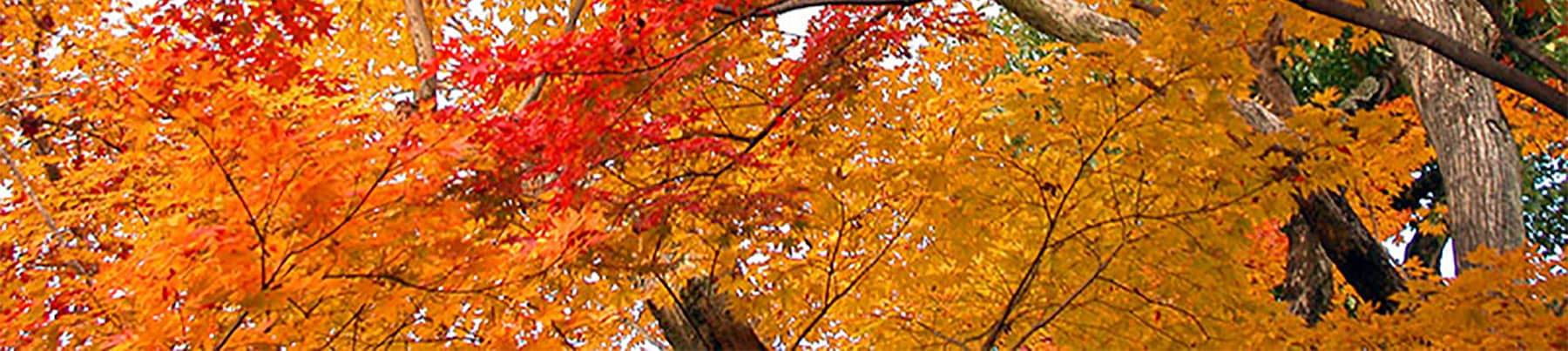 An Autumn Day Of Trees And Leaves Picture