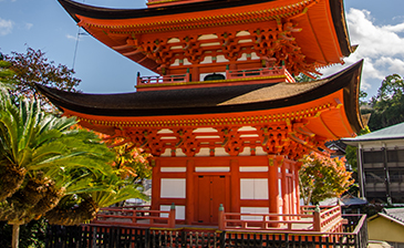 Kyoto Photography Tour
